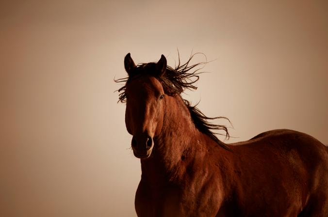 Todo para su caballo