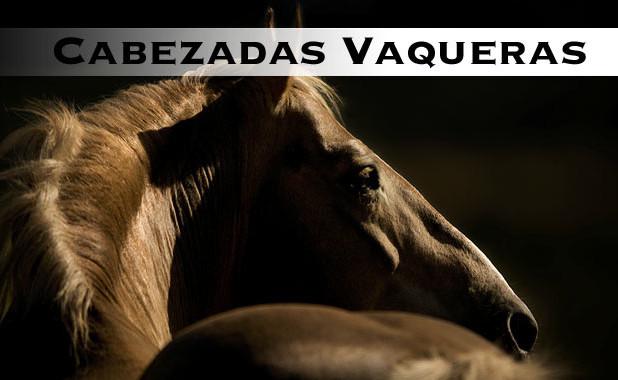 cabeza para caballos
