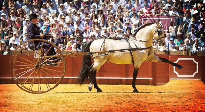 enganches de caballos tipos
