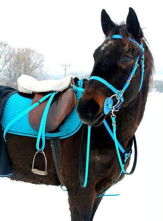 biothane-para-caballos
