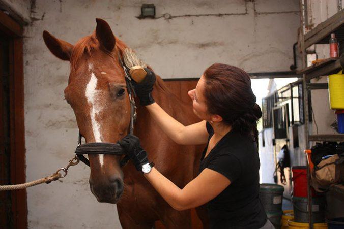 limpiar-a-tu-caballo