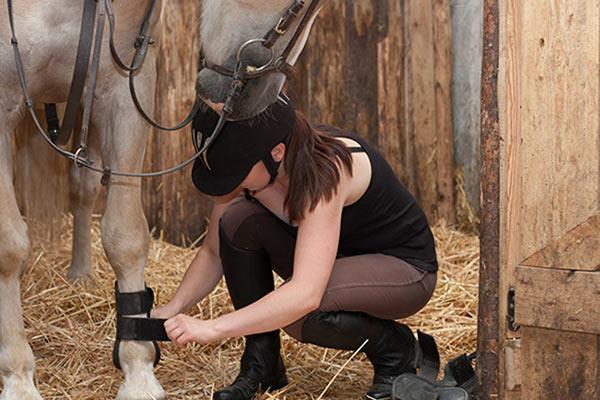 Protectores para caballos