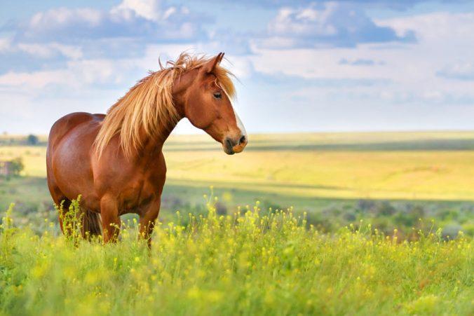 proteger a tu caballo de los insectos