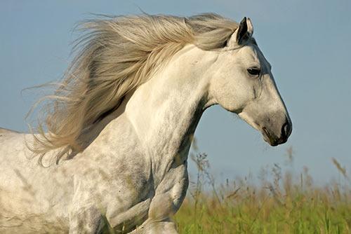 Crin caballos limpia